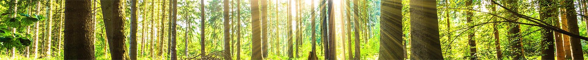Wald-Ausschnitt